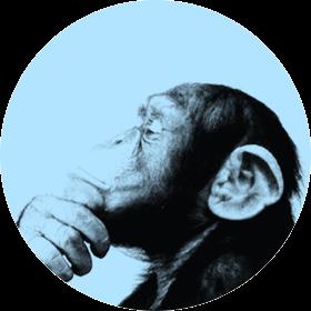 Monkey Republic webdesign bureau Den Haag