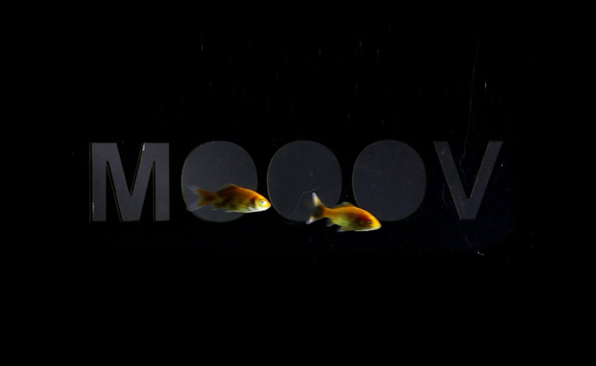 MOOOV Dans Muziek Sport Beweging